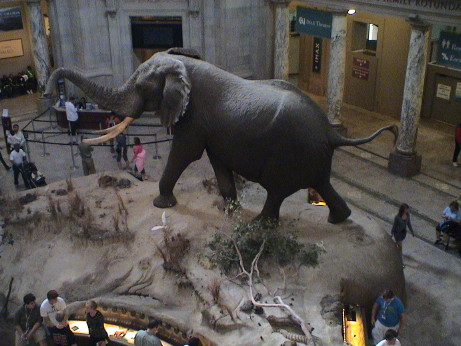 Natural History Museum Dc Saturday Hours