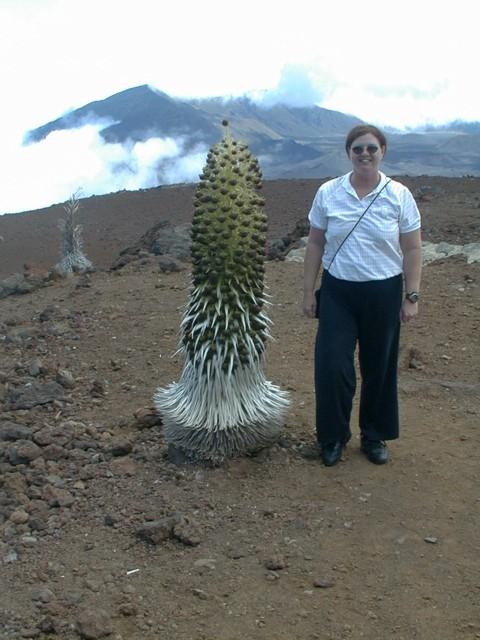 The Sword Volcano Complex - The Sword Volcano Complex
